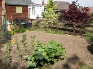 dug-garden