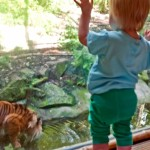 Zoe got a lovely view of this tiger (and his mate).