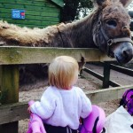 Zoe liked the donkey and did a good 'ee-aww'.